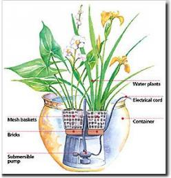 Pond plants for container water gardens. When it comes to pond plants for your container water garden, there's a lot of choice. Plants suitable for water gardens, containers or ponds, are readily available at well-stocked garden centers.         These