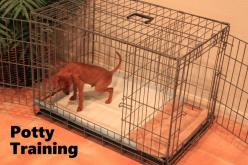 Potty Training a Puppy? We have a Fast & Easy solution! Over 50,000 dogs have been successfully potty trained with our system. Works as Fast as 3 days! Click on this link to watch our FREE world-famous potty training video: ModernPuppies.com: