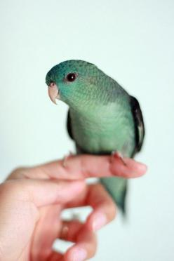 Pretty Bird: Animals, Color, Little Birds, Green, Pretty Birds