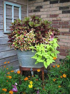 Pretty Coleus of different colors  and Chartreuse Potato Vines planted in the Old Washtub make a beautiful container garden placed in the flower beds. I Love The Old Washtubs!!: Green Thumb, Container Gardens, Sweet Potato Vines, Flower Pot, Wash Tubs, Ga