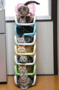 Pretty sure this photo should probably be the moment most people realize they are the crazy cat lady.: Cats, Animals, Pet, Funny, Crazy Cat, Kitty, Cat Lady