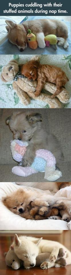 Puppy nap time: Nap Time, Pets Sleeping, Stuffed Animals, Cutest Pets, Toys Amber, Awww ️, Funny Cute Puppy Sleeping Toys, Cute Pets Puppies, Puppies Cuddling