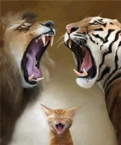 QUIT FIGHTING!!!!: Big Cats, Animals, Bigcats, Funny, Kitty, Photo