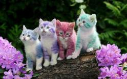 Rainbow Cats HAPPY EASTER TO EVERYONE ,GOD BLESS !!: Cats, Animals, Color, Pets, Kittens, Kitties, Rainbow, Kitty
