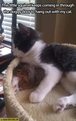 Random Funny Pictures – 49 Pics: Cats, Kitten, Animals, Friends, Sweet, Squirrels, Pet, Funny, Kitty
