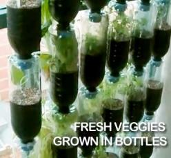 Recycle plastic soda bottles by turning them into a great fresh herb and veggie garden. Perfect for small yards, balconies, or even indoors (kitchen window garden?): Vertical Vegetable Gardens, Awesome Vertical, Garden Ideas, Recycled Plastic Bottles, Veg