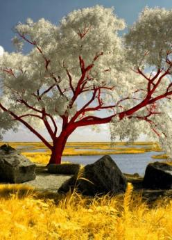 ✯ Red Beach Tree  Welcome to our stuffkit site on tree and flowers topic. Basically you can say nature photography, because HD tree and hdr flowers & gardens all could be in nature article and is the favorite topic for that who loves nature wallpapers
