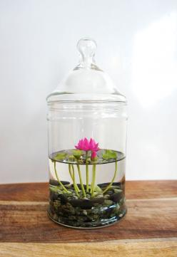 RESERVED  Tiny Pink Lotus Water Lily Terrarium in by MissMossGifts: Tiny Pink, Lily Terrarium, Glass Vase, Pink Lotus, Water Lily, Water Lilies