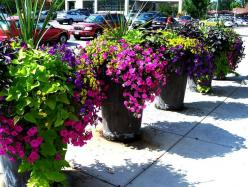 Rock planters with beautiful plants and flowers - perfect to mix textures and colors: Container Gardens, Garden Ideas, Yard, Color, Outdoor, Container Planting, Flower, Container Gardening