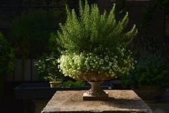 Rosemary plant surrounded by cascading white flowers. Very nice for a summer planter.: Container Gardens, Garden Ideas, Potted Plants, Deborah Silver, Fall Container, Container Gardening