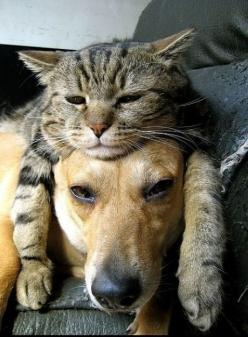 """Said to best friend: """"At least we have each other."""": Hats, Cats, Animals, Dogs, Friends, Pets, Funny"""