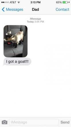sandvviches: my dad just got a goat I don't know why, but I laughed at this harder than I should have.: Funny Texts, Animals, My Dad, Funnies, Dads, So Funny, Baby Goats