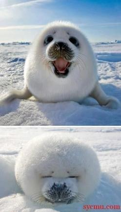 . (scheduled via http://www.tailwindapp.com?utm_source=pinterest&utm_medium=twpin&utm_content=post480677&utm_campaign=scheduler_attribution): Babies, Cuteness, Stuff, Adorable Animals, Pet, Box, Things, Baby Animals, Baby Seals
