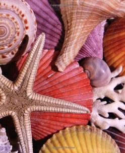 Seashells, Give us More Memories to Cling to Remind Us of Our Sunny Happy Beach Trips  <3: Sea Shells, Beach Seashells, Ocean, Colorful Seashells, Color Palette, Seashells Beaches, Color Combination
