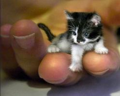See more 5 Cutest Kittens You will Ever See: Cats, Tiny, Animals, Adorable, Cutest Kitten, Smallest Cat, Kittens, Photo, Kitty