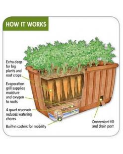 Self-watering vegetable planter. A relatively new (and fabulous) development in container gardening.: Container Gardens, Garden Ideas, Gardening Ideas, Vegetables, Self Watering Vegetable, Vegetable Planter, Patio Planters, Container Gardening, Vegetable