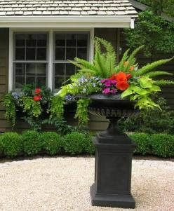 Shade containers so easy to do, goldilocks for the vine, begonia, fern, lime potato vine, impatiens, lobelia....all found at the greenhouse!: Container Gardens, Shade Containers, Potato Vines, Lime Potato, Container Idea, Container Gardening