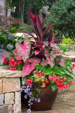 Shady Pots:  main dark leaved plant with pink is Dracena 'baby doll', the pink and green speckled heart shaped leaf on the left is a Caladium, the reddish flowers are from the begonia 'angel wing', the purple trailing plant is Scaevola, th