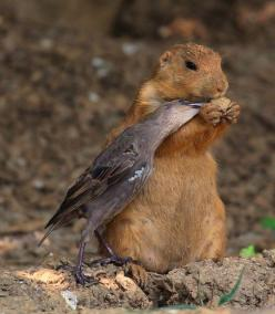 Sharing with a friend...Animals are often kinder to their friends than people are. Can we learn from this?: Animals, Friends, Nature, Odd Couple, Birds, Photo