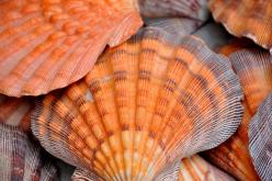 Shells ~ An example of orange and gray in nature.: Orange Shells, Sea Shells, Colors, Beautiful, Beach, Color Palette, Photo