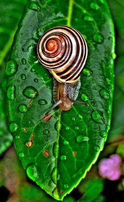Snail, one of the creatures this earth has that I've always had a special place in my heart for!: Snails, Animal Mollusk, Animals, Drop, Snail Photograph, Snail