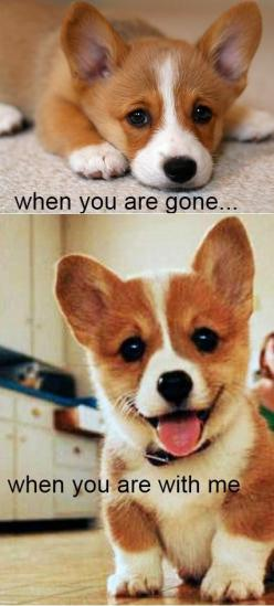 SO CUTE. I want one! :) ...........click here to find out more http://googydog.com: Corgis, Doggie, Animals, Dogs, Pet, Puppys, So True, Corgi S, Box