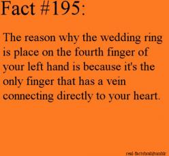 So I just read that this actually is an ancient belief and not true, but still a cool history fact.: Heart, Fun Facts ️, Ancient History Facts, Interesting Facts, Finger, Funfacts, Fun Facts P, Hacks, Random Facts