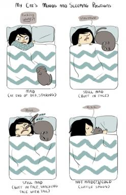 So true! But my cat has another mood where he sits nose to nose at 4:30 in the morning, JUST to wake me up to pet him.: Cats, Pet, So True, Crazy Cat, Cat S Mood, Kitty, Animal, Cat Lady