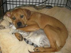 soft kitty, warm kitty....MY kitty!: Cats, Animals, Friends, Dogs, Sweet, Pets, Adorable, Funny Animal