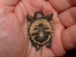Squee!: Babies, Animals, So Cute, Pet, Adorable, Things, Baby Turtles