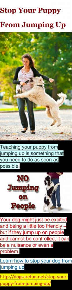 Stop Your Puppy From Jumping Up #dog training: Puppy Training Jumping, Animals Pets, Training Dogs, Pets Dogs Training, Dog Training Tips Jumping, Training Puppy Tips, Puppy Training Tips, Dog Stuff