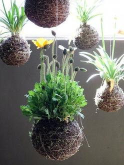 String gardens. Wrap the root ball with sheet moss, then wrap tightly with string and hang. What a conversation piece.: Idea, String Gardens, Moss Ball, Plants, Kokedama