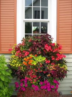 Stunning Combination For Any Container - Coleus, geraniums, petunias, calibrachoa and fuchsia.: Garden Container, Container Gardens, Outdoor, Container Gardening, Window Boxes, Color Combination