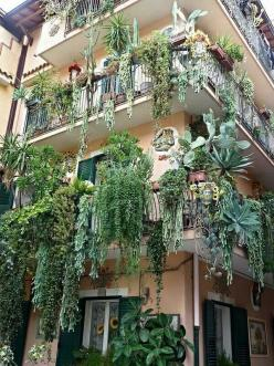 Succulent balconies. Go to blog for lots of wonderful ways to help add to the beauty and health of the world.: Green Thumb, Balcony Gardening, Dream House, Balcony Gardens, Balconies Plants, Flowers, Succulent Balconies, Hanging Gardens