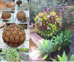 Succulents are an awesome way to add excitement to your home garden. Make succulents ball --> http://wonderfuldiy.com/wonderful-diy-garden-hanging-succulent-ball/: Succulent Ball, Ideas, Flower Ball, Gardening, Hanging Flower, Delicious, Hanging Succul