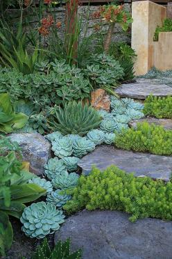 succulents as edging: Succulents Garden, Garden Ideas, Front Yard, Outdoor, Backyard, Garden