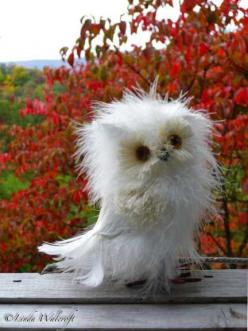 Such a cute owl~: Fluffy Owl, Animals, Baby Owls, Bad Hair, Disheveled Owl, Morning, White Owl, Birds