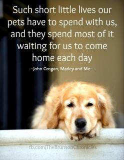 Such short little lives our pets have to spend with us, and they spend most of it waiting for us to come home each day. ~ John Grogan, Marley and Me: Doggie, Animals, Dogs, Quotes, Pets, So True, Puppy, Friend, Golden Retriever