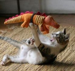 Surprised by a sneak Stegosaurus attack, Wendy is forced to defend herself...: Cats, Animals, Kitten, Dinosaur, Funny Cat, Pet, Kitty, Photo