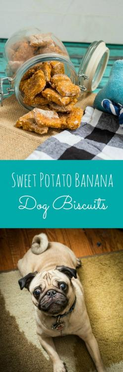 Sweet Potato Banana Dog Biscuits | girlinthelittleredkitchen.com: Sweet Potato Dog Treat, Dogs, Potato Banana, Pet, Banana Sweet Potato, Dog Biscuits Recipes, Bananas, Banana Dog Treat Recipe, Dog Treats