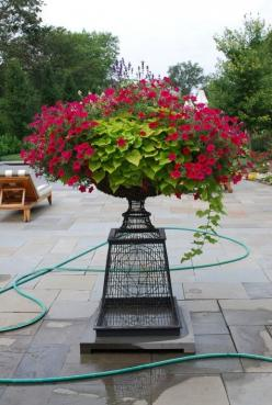 Sweet potato, petunia. Iron pedestal container garden. Elevated container planting.: Container Gardens, Sweet Potato Vines, Flower Pots, Wave Petunia, Container Gardening, Container Ideas