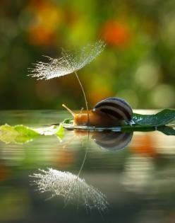 Taking my umbrella out on my boat ride today, just in case.: Snails, Animals, Nature Photos, Macro Photography, Nature Photography, Snail, Beautiful Life