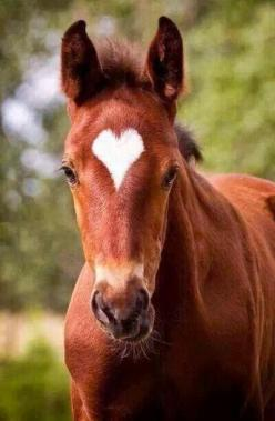 Tattoos And Animals: This is one of the most adorable pictures of a horse... get more only on http://freefacebookcovers.net: Beautiful Horses, Animals, Perfect Heart, Valentine, Foal