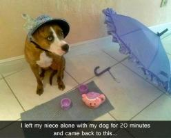 Tea time!!! This is the reason you can't leave your pibble with kids!! The attention is addicting!: Animals, Dogs, Tea Parties, Funny Stuff, Funnies, Funny Animal