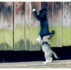 teamwork.: Cats, Kitten, Animals, Help, Teamwork, Friends, Pet, Funny, Kitty