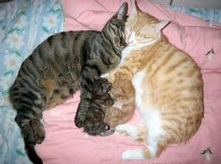 The 50 Cutest Things That Ever Happened: Cats, Animals, Sweet, Kittens, Baby, Kitties, Families, Kitty