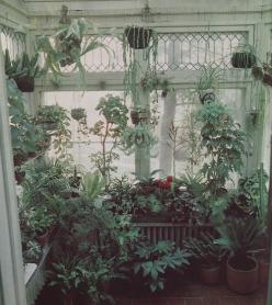 The beauty: Green Thumb, Greenhouse, Houseplant, Plants, Indoor Garden, Green House, Sun Room, Sunroom