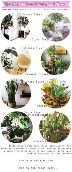 The Best Indoor Plants and Trees. Kinda over the Fiddle Leaf - Home Heart Craft: Garden Indoor, Heart Crafts, Best Indoor Plants, Living Room, Houseplant, Fiddle Leaf