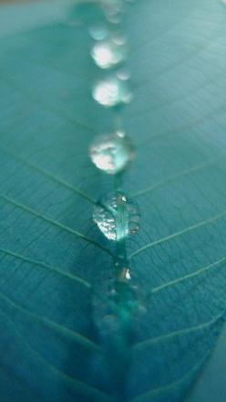 The effect of glycerin on an artificial leaf LX3: Stephen Cotterell, Leave, Macro Photography, Dew Drop, Cotterell Photography, Leaf Lx3, Artificial Leaf, Water Drop, Rain Drop