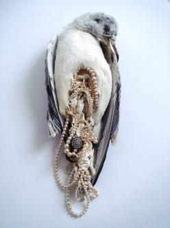 The Inside is Much More Precious than the Outside (Jane Howarth, The Ladies, 2012): Jane Howarth, Inspiration, Taxidermy, Pearls, Posts, Birds